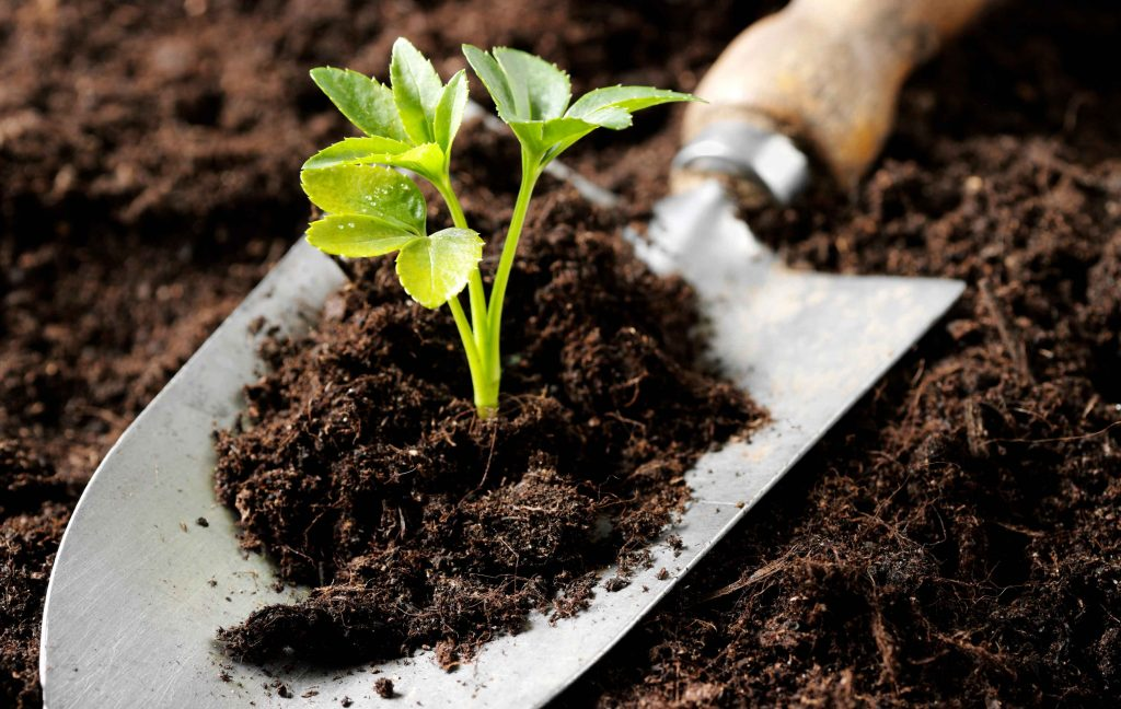 homemade organic fertilizer